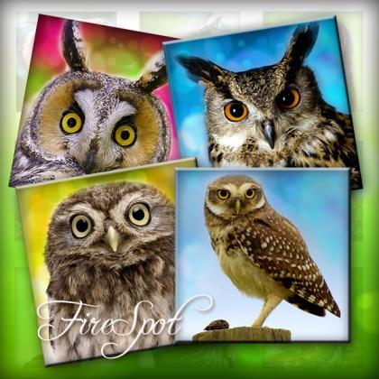 Forest Owl animal- Digital Collage ..
