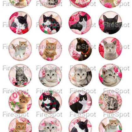 Pink Flowers Rose Cat animals - Dig..