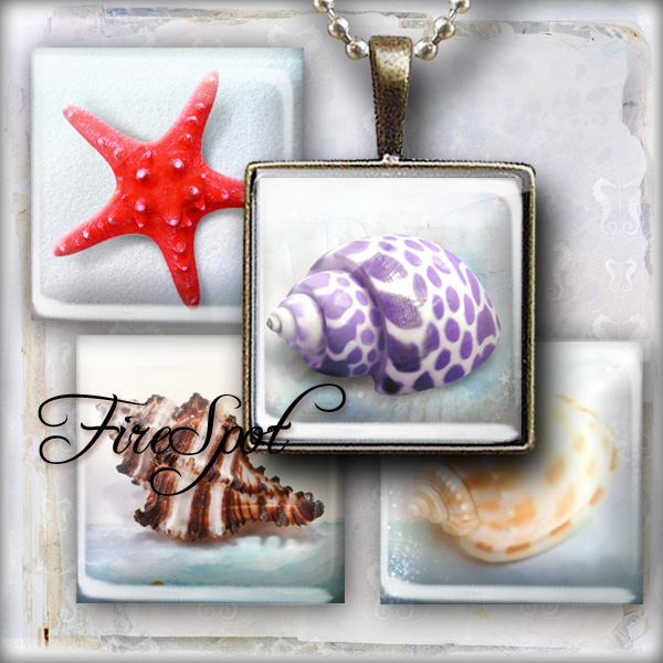 Shell Conch Starfish sea shell animals - Digital Collage Sheet 1.5inch,1 inch,25 mm,20 mm Square Glass Pendants, Bottlecaps,Scrapbooking