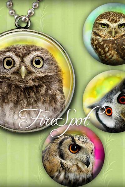 Lovely Owl animal- Digital Collage Sheet 1.5 inch,1.25 inch,30mm,1 inch,25mm Round printable images.Glass Pendants,Scrapbooking,Bottlecaps