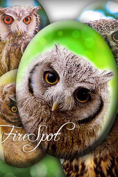 Forest Owl animal- Digital Collage Sheet 30x40 mm,22x30 mm,18x25 mm,13x18 mm Oval Glass Pendants,Ring, Scrapbooking,Bottlecaps