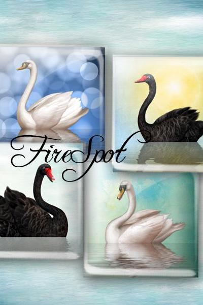 Vintage White Swan Black Swan - Digital Collage Sheet 1.5inch,1 inch,25 mm,20 mm Square,animal,printable images,glass Pendants,Scrapbooking