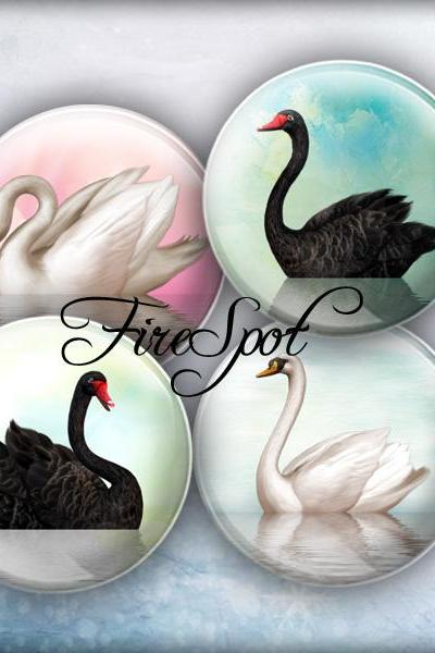 White Swan Black Swan -Digital Collage Sheet 1.5 inch,1.25 inch,30 mm,1 inch,25 mm Circles Glass Pendants, Bottlecaps,Scrapbooking.animal