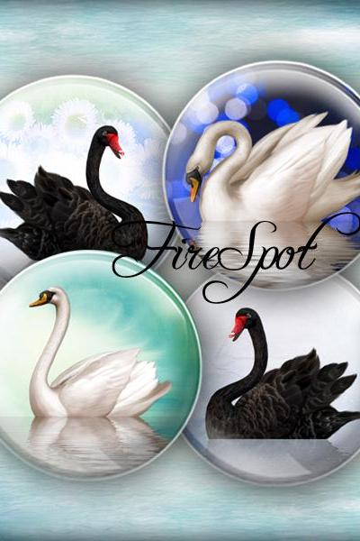 White Swan Black Swan -Digital Collage Sheet 20mm, 18mm, 16mm, 14mm, 12mm Circles Glass Pendants, Bottlecaps,Scrapbooking.animal