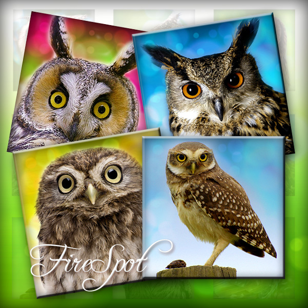 Forest Owl animal- Digital Collage Sheet 1.5 inch,1 inch,25 mm,20 mm Square printable images for Glass Pendants,Ring,Scrapbooking,Bottlecaps